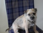 Poppy on the chair