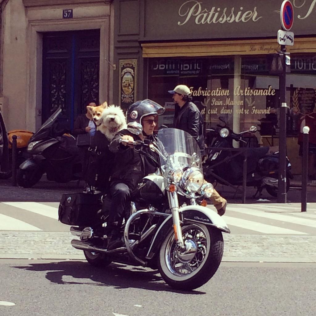 Les chiens sur motor