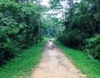 Green corridor changmoh blog singapore lifestyle