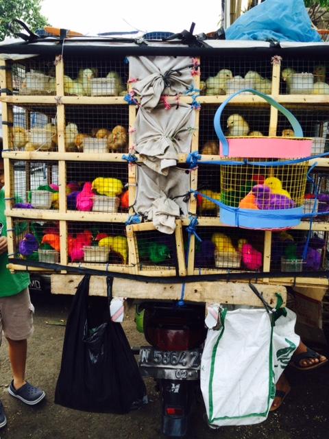 Chick cargo - Ubud, Bali