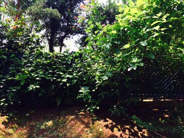Dividing hedge